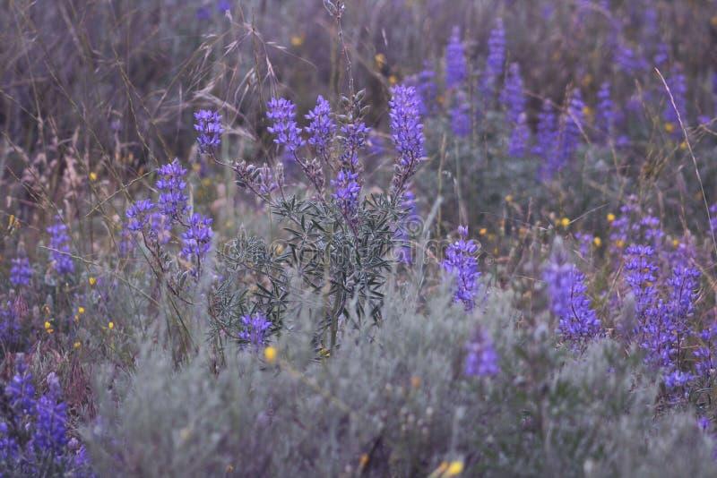 Голубые цветки часа стоковое фото rf