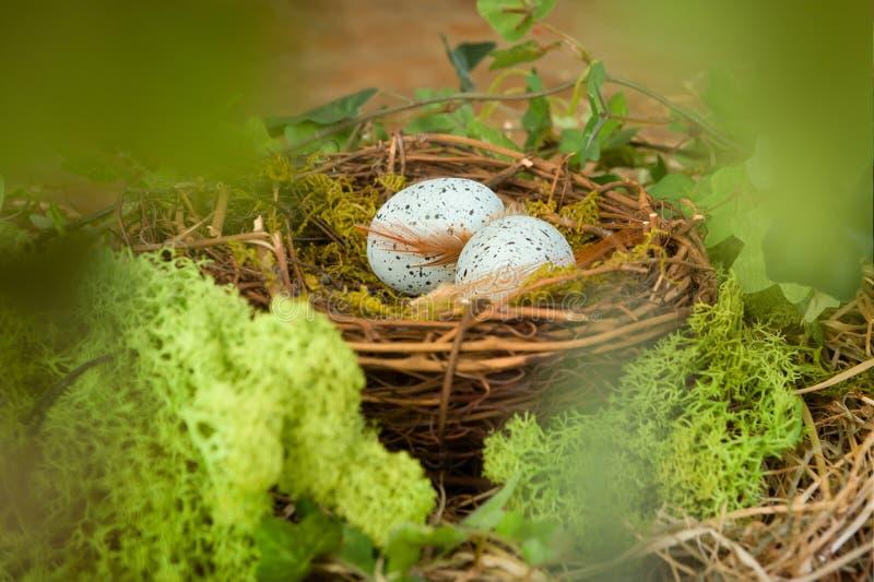 Голубые яичка в гнезде стоковые фото