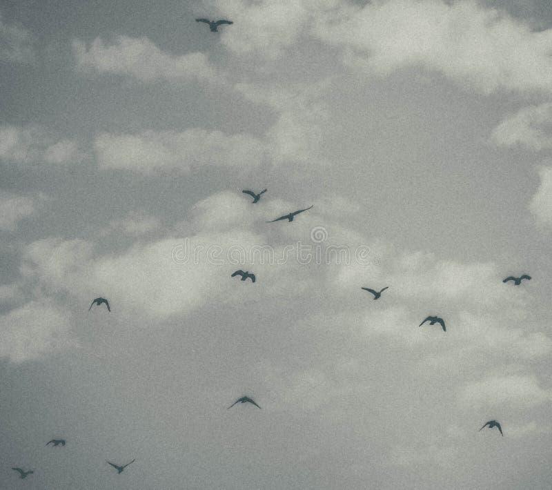 Голубь в небе с облаками стоковые фото