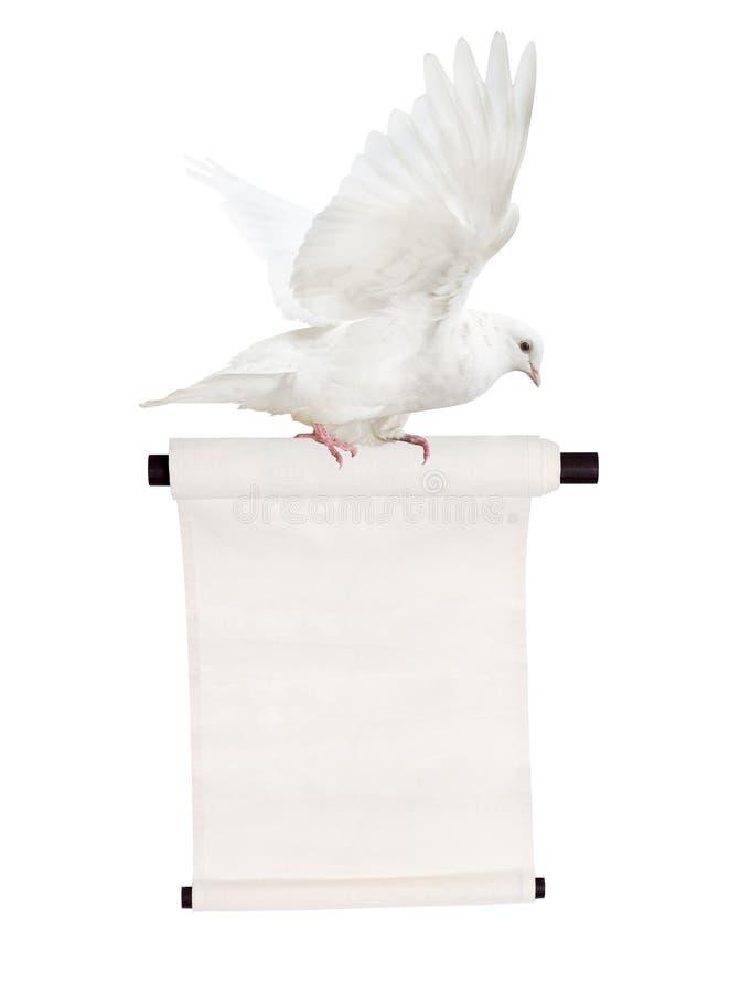 Голубь изолированный летанием белый с переченем стоковая фотография rf