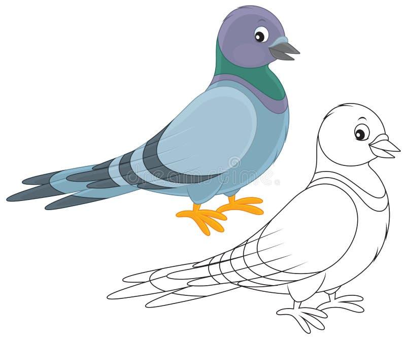 Голубь иллюстрация вектора
