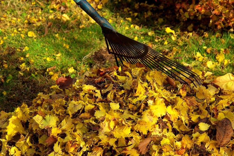 Грабл листьев стоковая фотография rf
