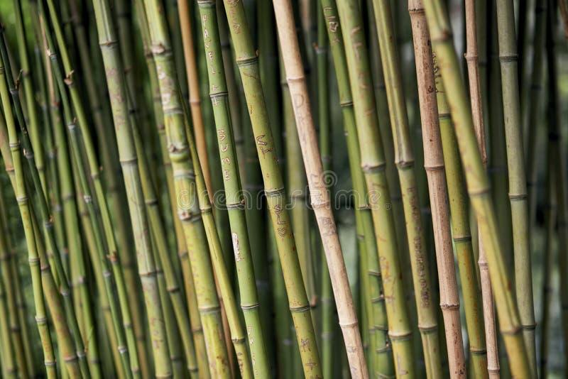 Гравировки влюбленности на бамбуках стоковые изображения rf