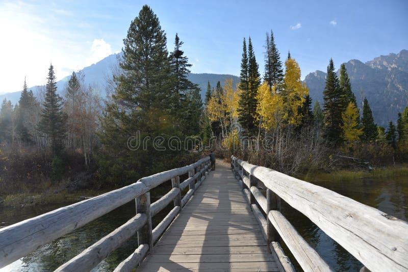 Грандиозные деревья национального парка Teton начинают изменять цвет в предыдущем падении и эффектное место, который нужно увидет стоковая фотография rf