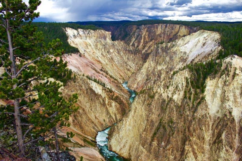 Гранд-каньон Йеллоустона с сосной в переднем плане стоковая фотография
