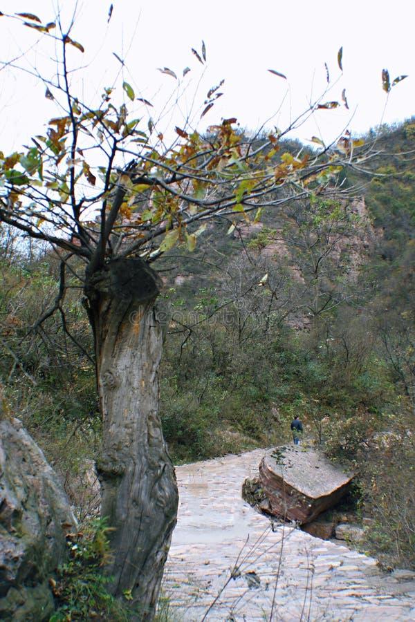 Гранд-каньон Yangshao стоковые фотографии rf