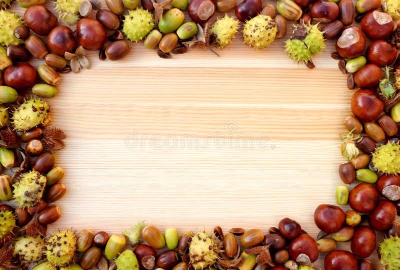Граница детрита осени beechnuts, плодов конского каштана и жолудей на древесине стоковое изображение