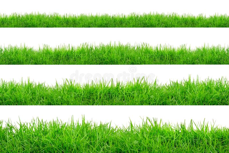 Граница зеленой травы изолированная на белой предпосылке стоковая фотография