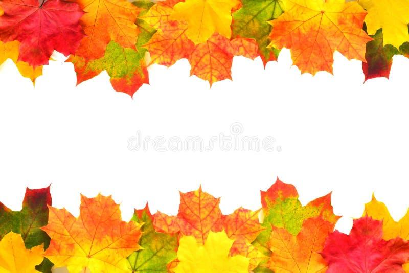 Граница листьев осени стоковые изображения
