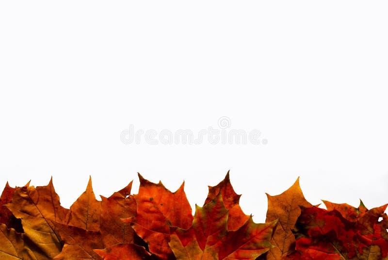Граница листьев стоковая фотография rf