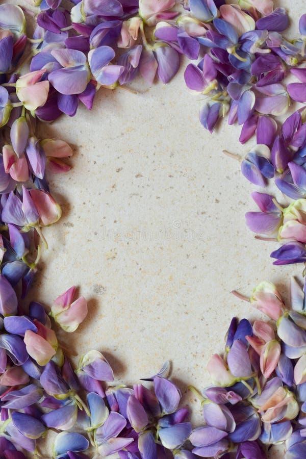 Граница пинка и пурпурных lupine цветков День ` s дня рождения, матери, ` s валентинки карточка дня, 8-ое марта, свадьбы или приг стоковые фото