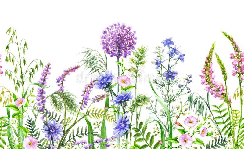 Граница полевых цветков безшовная горизонтальная бесплатная иллюстрация