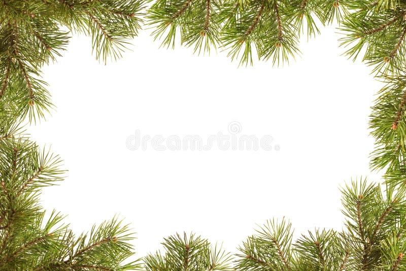 Граница, рамка от ветвей рождественской елки стоковые изображения
