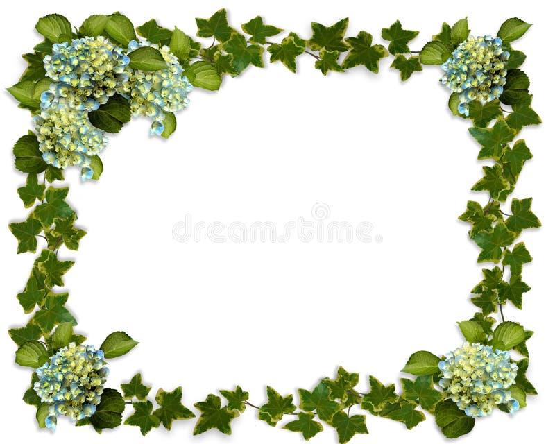 граница цветет плющ hydrangea иллюстрация штока