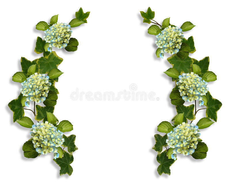 граничит плющ hydrangea иллюстрация штока