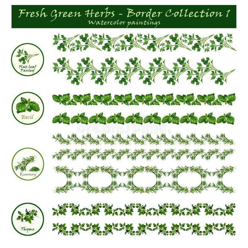 Граничьте акварели собрания 1 - зеленые травы - - декоративные иллюстрация вектора
