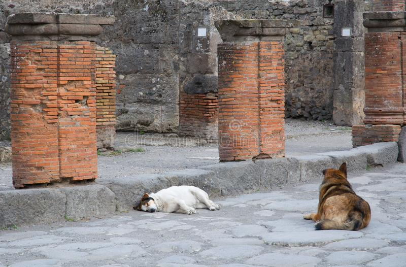 грандиозный дождь pompeii palestra Италии стоковые изображения