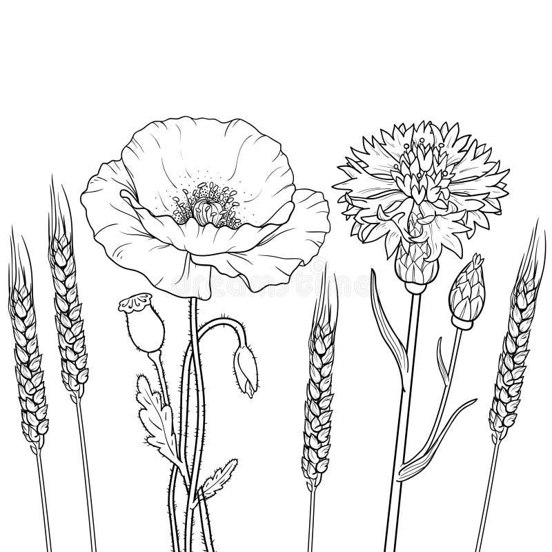 Графики конспектируют floristic цветки, мак, cornflower, пшеницу иллюстрация вектора