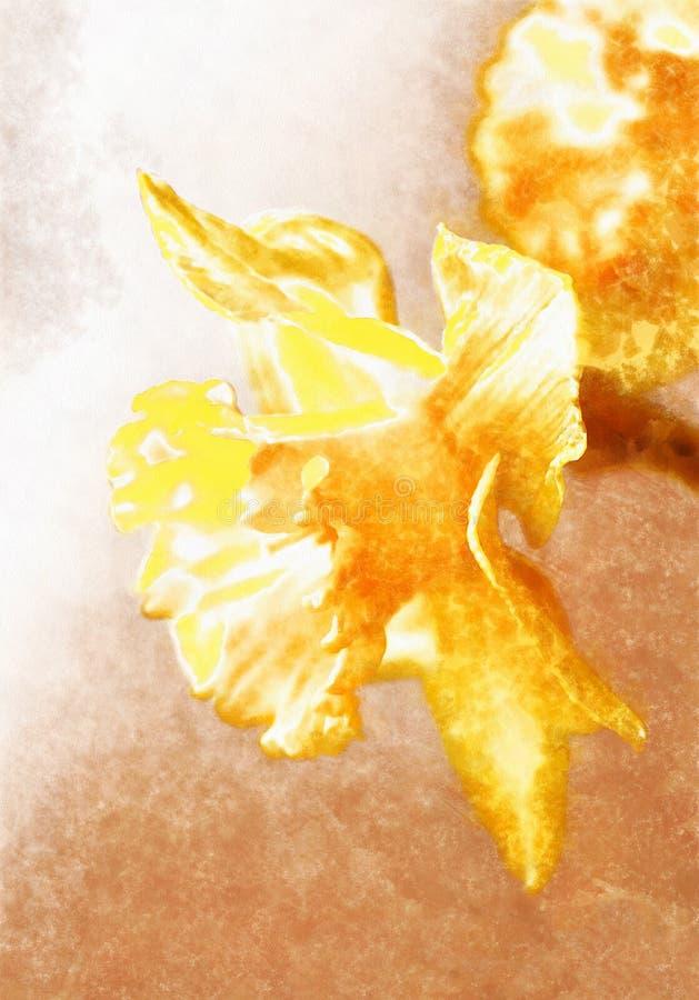 График с цветком желтого цвета daffodil, ярким narcissus иллюстрация штока