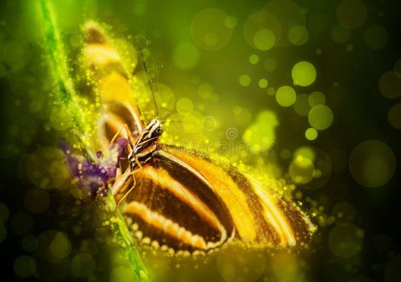 график фантазии бабочки цифровой произведенный фракталью иллюстрация вектора