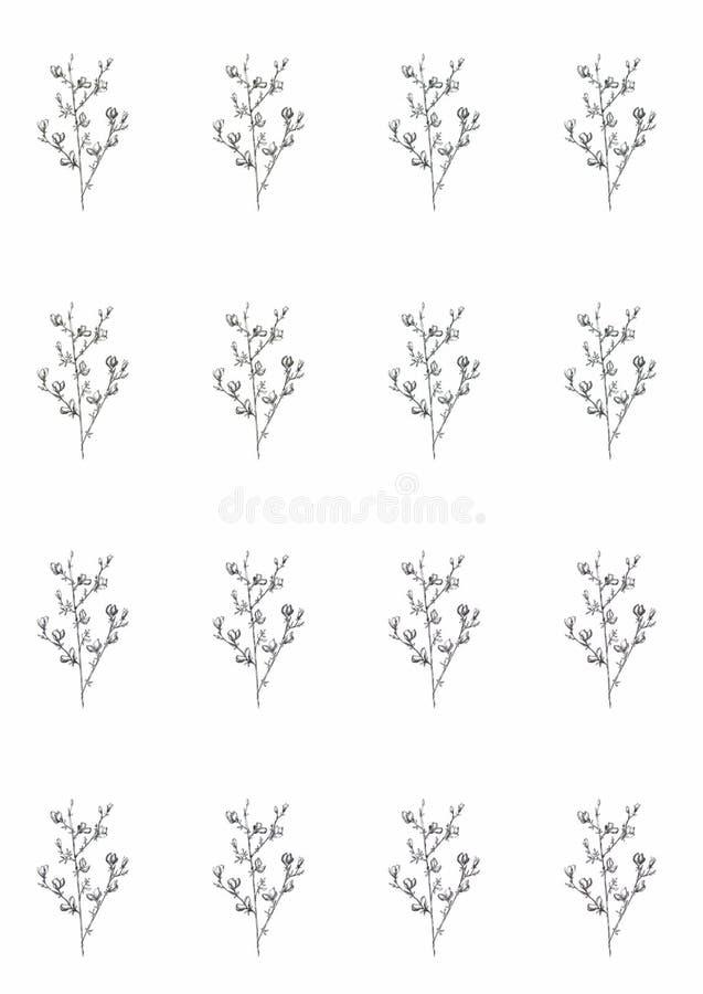 Графическая линия картина цветков на белой предпосылке, красивая иллюстрация искусства monochrome еда плода вегетарианская бесплатная иллюстрация