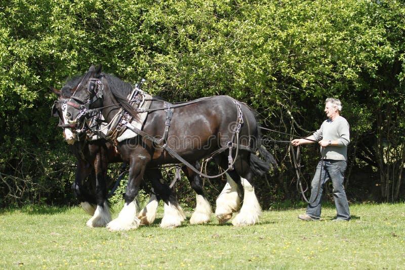 графство лошадей хуторянина совместно работая стоковая фотография