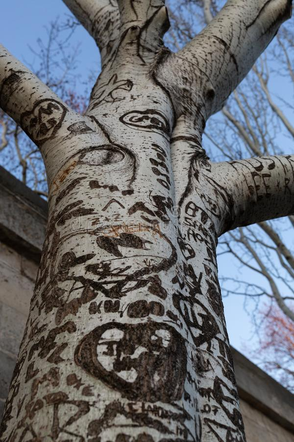 Граффити любов на дереве стоковые изображения