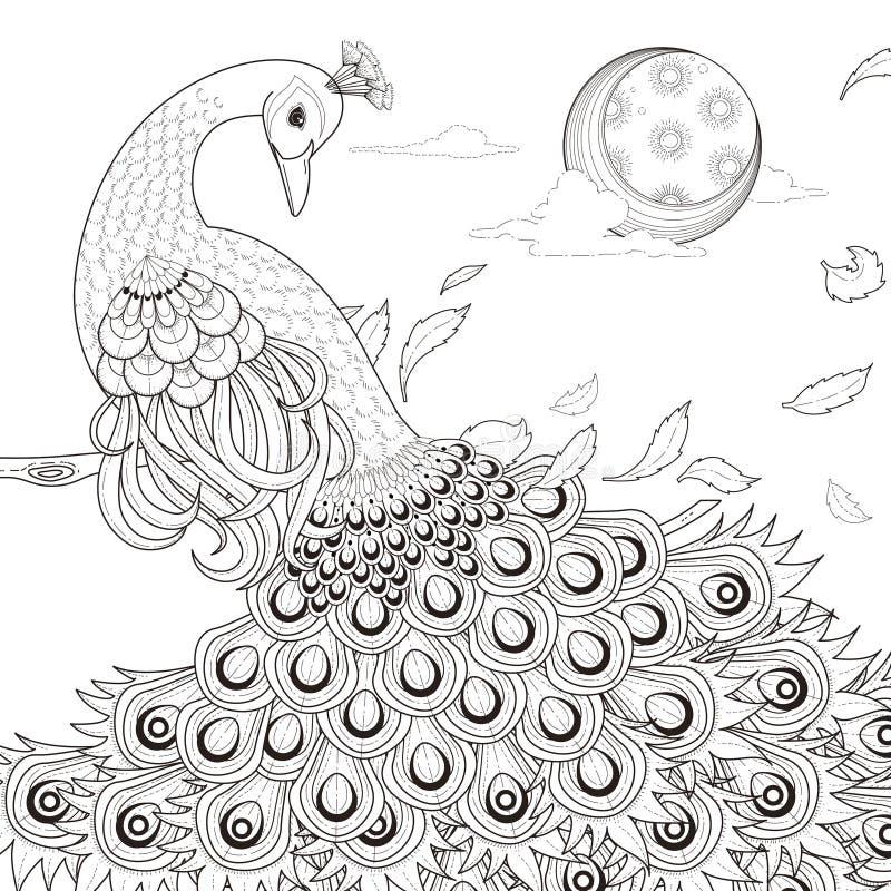 Грациозно страница расцветки павлина иллюстрация штока