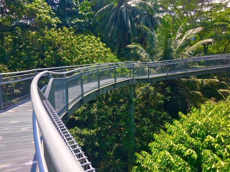 Гребни прогулки верхней части дерева южные отстают в Сингапуре стоковые изображения rf