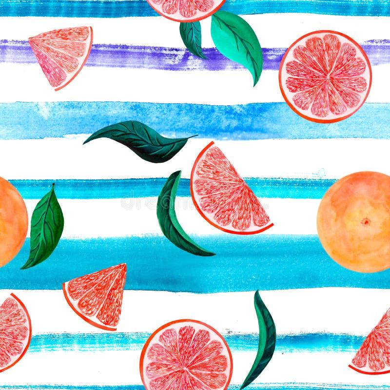 Грейпфрут картины цитруса акварели, флористическая безшовная картина, ботаническая естественная иллюстрация на нашивке бирюзы фио стоковое изображение rf