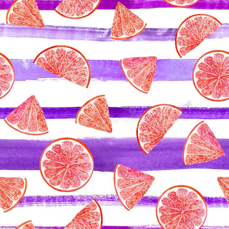 Грейпфрут картины цитруса акварели, флористическая безшовная картина, ботаническая естественная иллюстрация на ультрафиолетов наш стоковое изображение rf