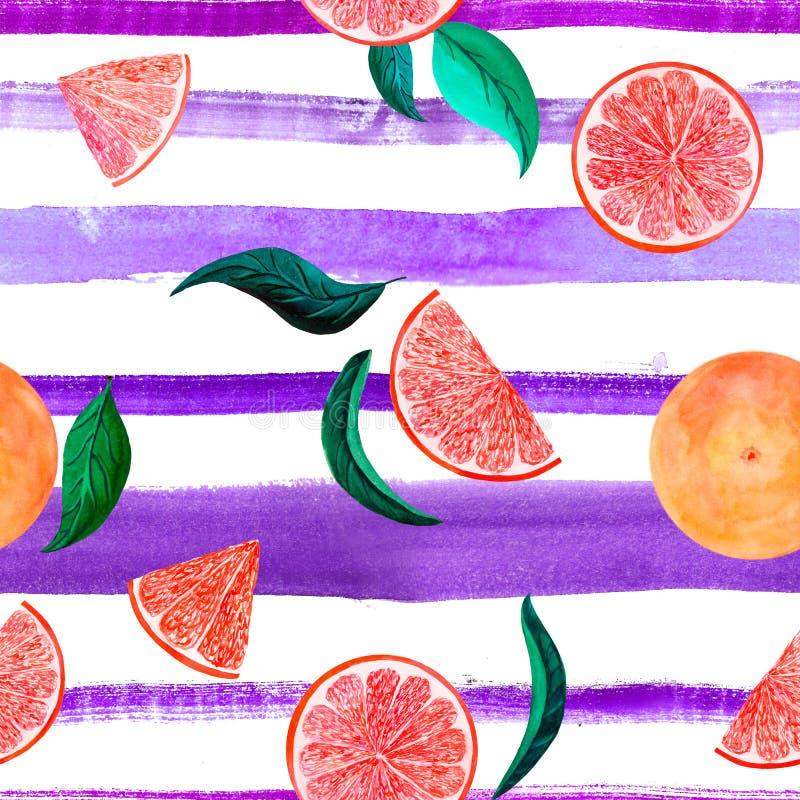 Грейпфрут картины цитруса акварели, флористическая безшовная картина с листьями, иллюстрация ветви ботаническая естественная даль стоковые фотографии rf