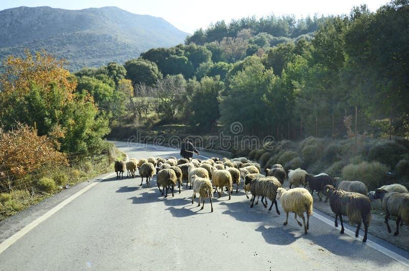 Греция, Крит, овцы стоковые изображения