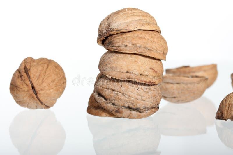 грецкие орехи изолированные группой белые стоковое изображение rf
