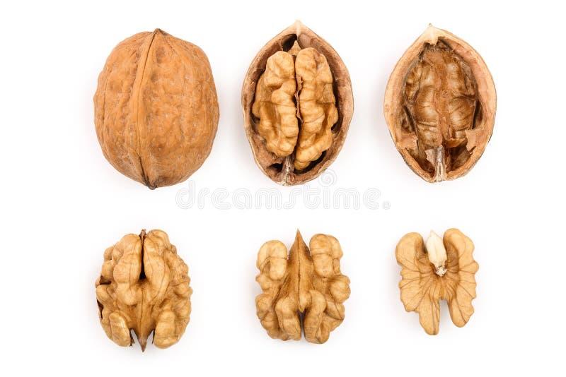 грецкие орехи изолированные предпосылкой белые Взгляд сверху Плоское положение Комплект или собрание стоковые изображения rf