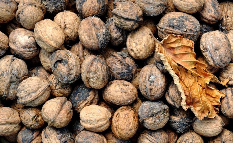 Грецкие орехи и лист стоковое фото rf