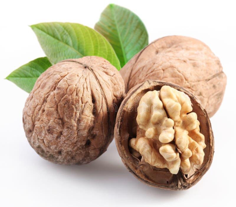 грецкие орехи листьев стоковое изображение rf