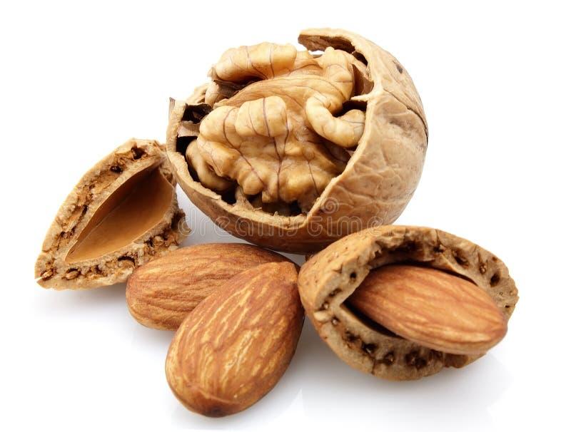 грецкие орехи миндалины стоковое фото