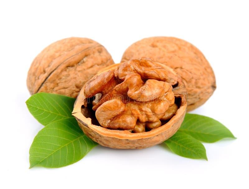 Грецкие орехи с листьями стоковые изображения
