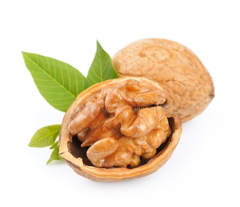 Грецкие орехи с листьями стоковое изображение