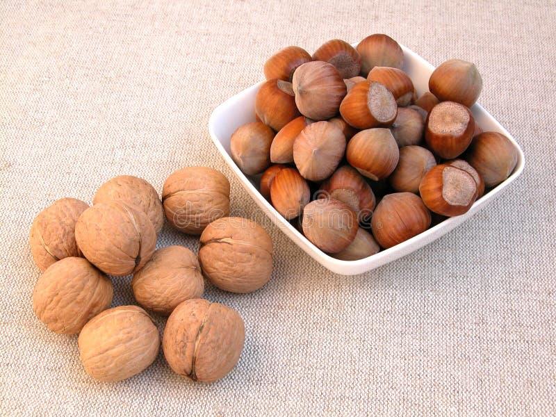 грецкие орехи фундуков стоковые изображения rf