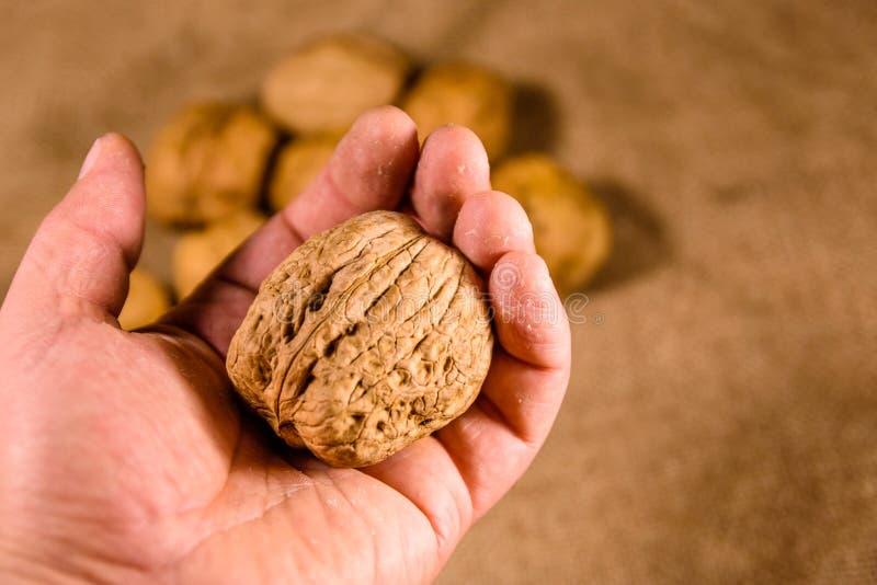 Грецкий орех в мужской руке над дерюгой стоковое фото rf