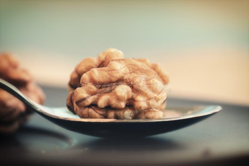 Грецкий орех на ложке стоковая фотография rf