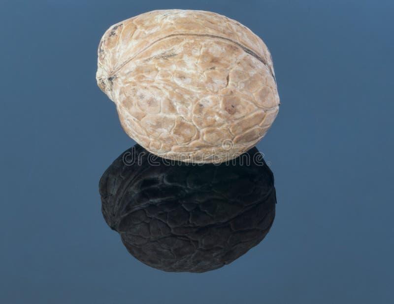 Грецкий орех на темной предпосылке С отражением на переднем плане стоковая фотография rf