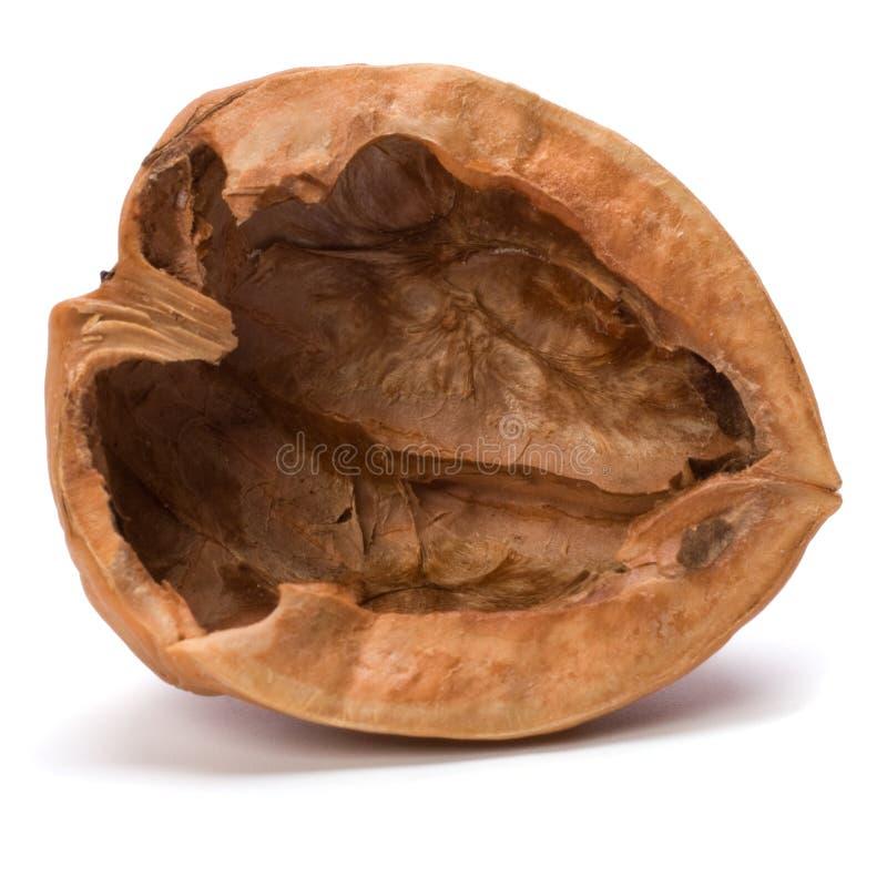 грецкий орех раковины стоковая фотография