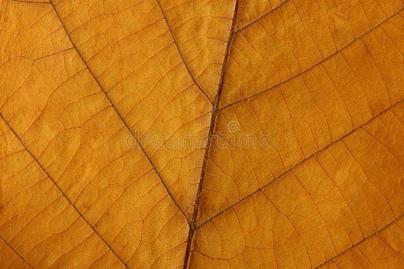 грецкий орех текстуры листьев стоковые изображения rf
