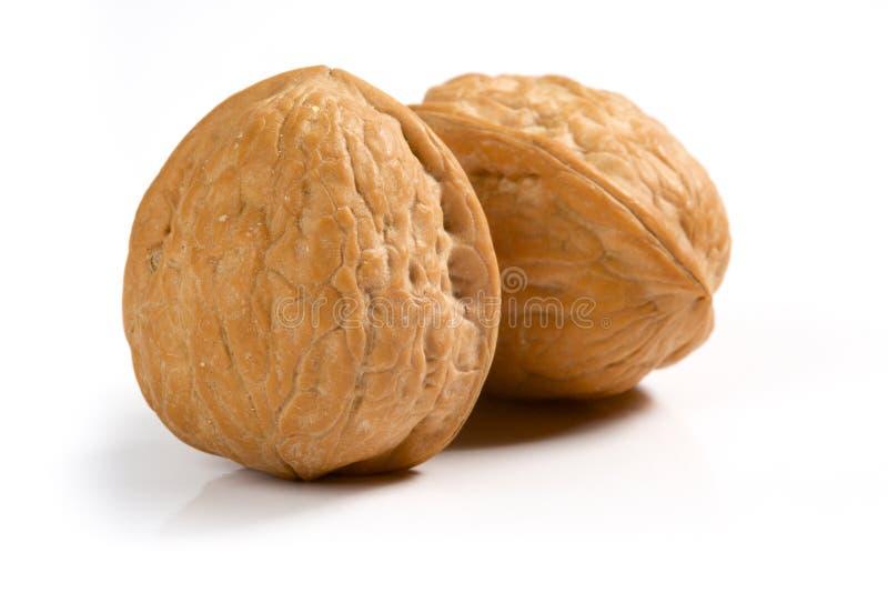 2 грецкого ореха стоковое фото rf