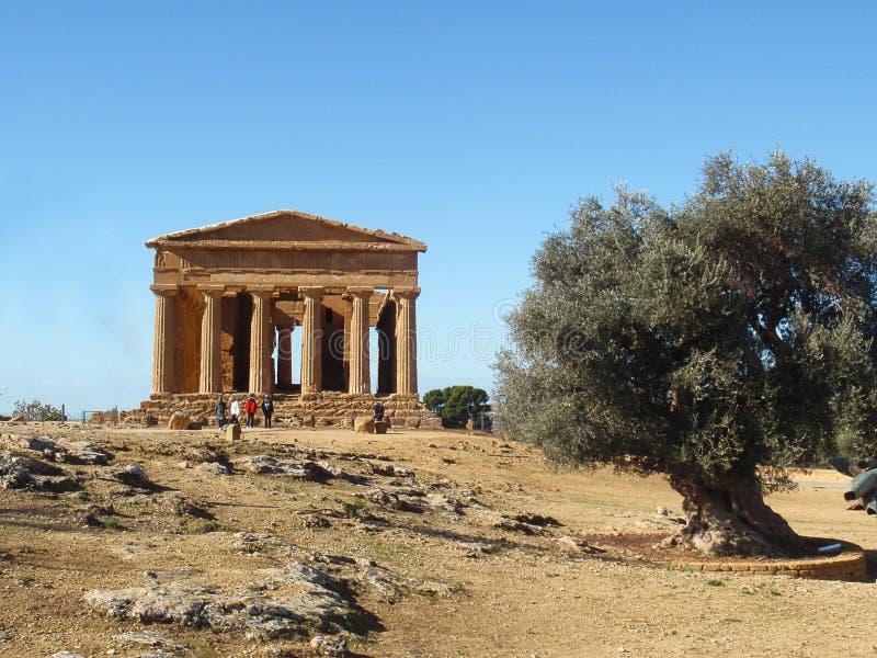 Греческий висок с оливковым деревом стоковые изображения
