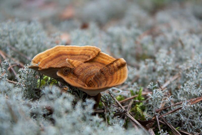 2 гриба в лишайнике стоковая фотография