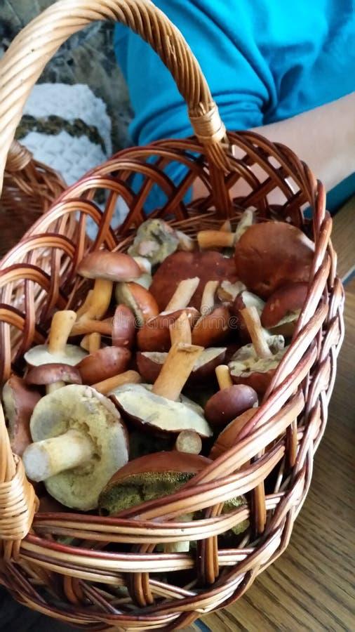 2 гриба стоковые фото